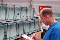 World Guppy Contest 2006